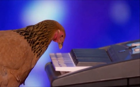 When A Chicken Plays The Piano Better Than You